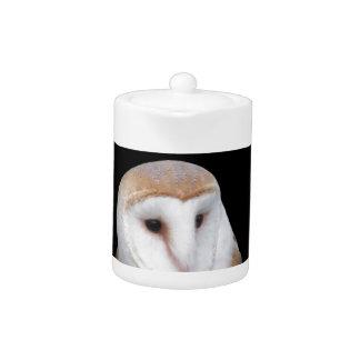 Portrait of barn owl isolated on dark background teapot
