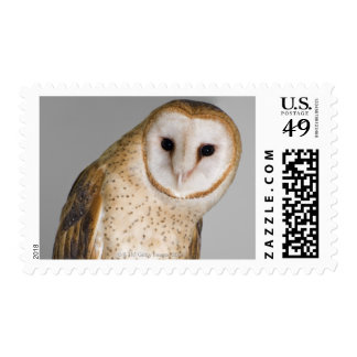 Portrait of barn owl (Tyto alba). Postage