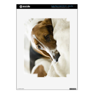 Portrait of Bassett, Washington 2 Decals For iPad 3