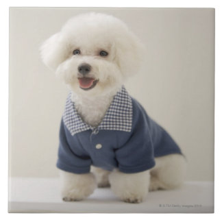 Portrait of Bichon Frise standing on table Ceramic Tile