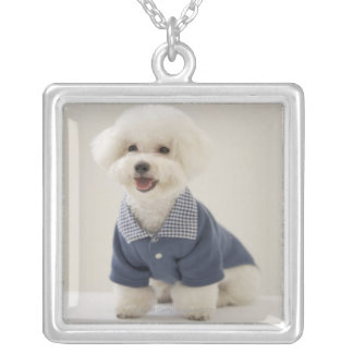 Portrait of Bichon Frise standing on table Silver Plated Necklace