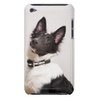 Portrait of black and white shetland sheepdog iPod touch cases