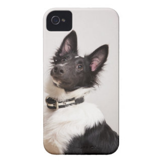 Portrait of black and white shetland sheepdog iPhone 4 Case-Mate case