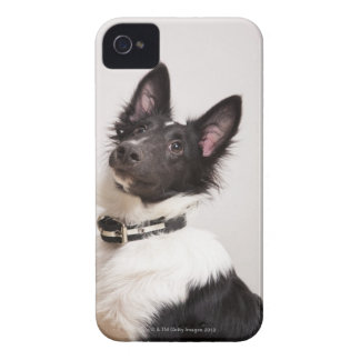 Portrait of black and white shetland sheepdog iPhone 4 cover