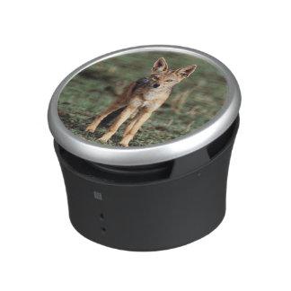 Portrait of Black-Backed Jackal Bluetooth Speaker