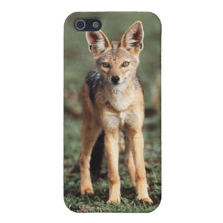 Portrait of Black-Backed Jackal Cover For iPhone 5