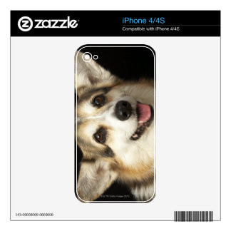 Portrait of black, brown and white Corgi Decal For The iPhone 4S