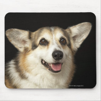 Portrait of black, brown and white Corgi Mouse Pad
