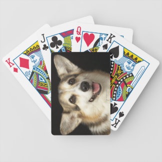 Portrait of black, brown and white Corgi Poker Cards