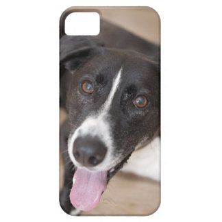 portrait of black dog iPhone 5 cases