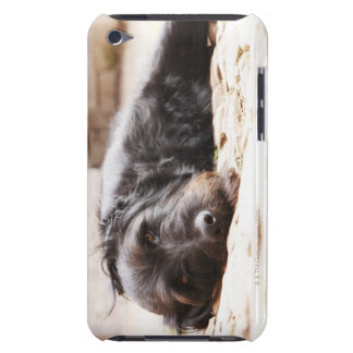 portrait of black dog lying in yard barely there iPod covers