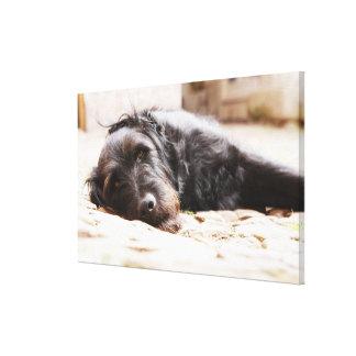 portrait of black dog lying in yard canvas print
