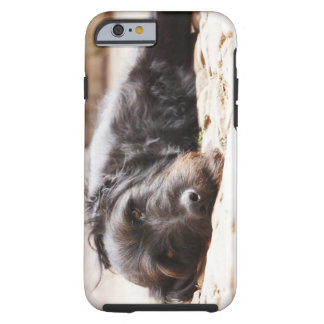 portrait of black dog lying in yard tough iPhone 6 case