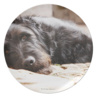 portrait of black dog lying in yard melamine plate
