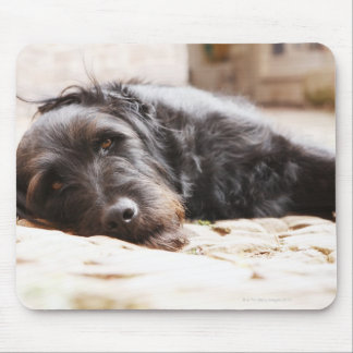 portrait of black dog lying in yard mouse pad