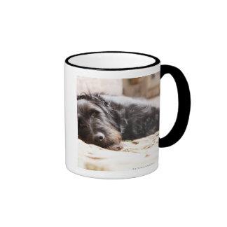 portrait of black dog lying in yard coffee mug