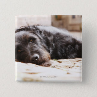 portrait of black dog lying in yard pinback button