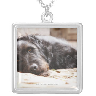 portrait of black dog lying in yard silver plated necklace