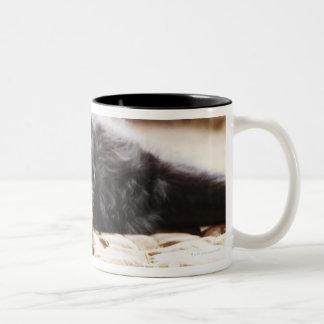 portrait of black dog lying in yard Two-Tone coffee mug