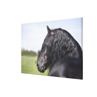 portrait of black horse with long mane canvas print