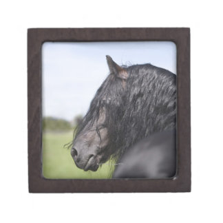 portrait of black horse with long mane jewelry box
