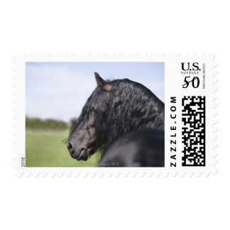 portrait of black horse with long mane postage