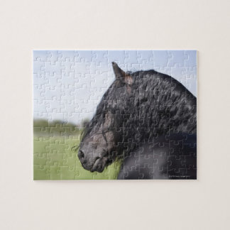 portrait of black horse with long mane jigsaw puzzle