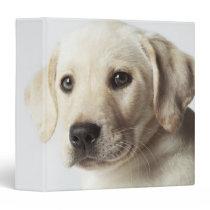 Portrait of blond Labrador Retriever Puppy Binder