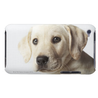 Portrait of blond Labrador Retriever Puppy iPod Touch Cover