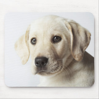 Portrait of blond Labrador Retriever Puppy Mouse Pad