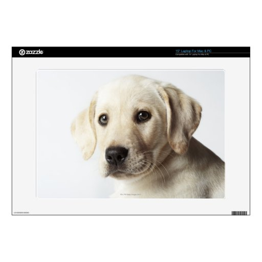 "Portrait of blond Labrador Retriever Puppy 15"" Laptop Skin"