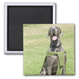 Portrait of Blue Great Dane 2 Inch Square Magnet