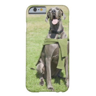 Portrait of Blue Great Dane Barely There iPhone 6 Case