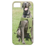 Portrait of Blue Great Dane iPhone 5 Cases
