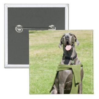 Portrait of Blue Great Dane Pinback Button