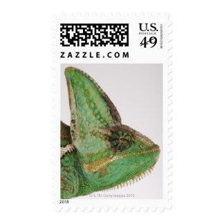 Portrait of boldly colored Yemen chameleon Postage Stamp