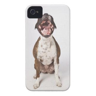 portrait of boxer dog yawning iPhone 4 case