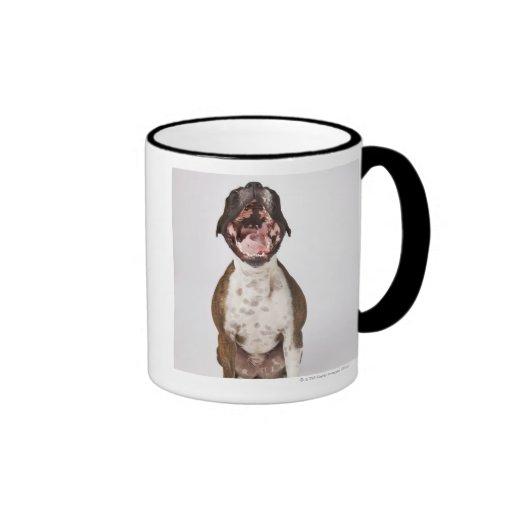 portrait of boxer dog yawning mugs