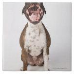 portrait of boxer dog yawning tiles