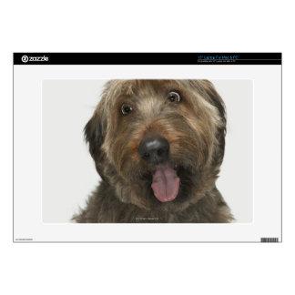 "Portrait of Briard dog 15"" Laptop Skins"