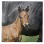 portrait of brown foal large square tile