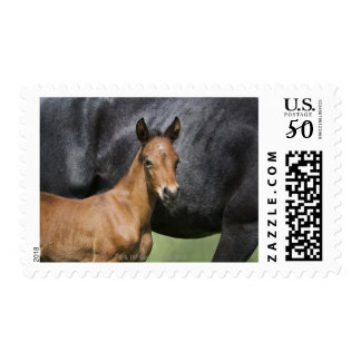 portrait of brown foal postage
