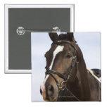 portrait of brown horse 2 inch square button