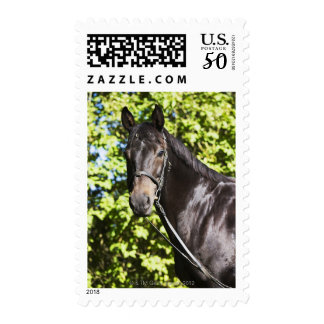 portrait of brown horse 2 postage