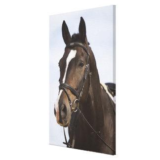 portrait of brown horse canvas print