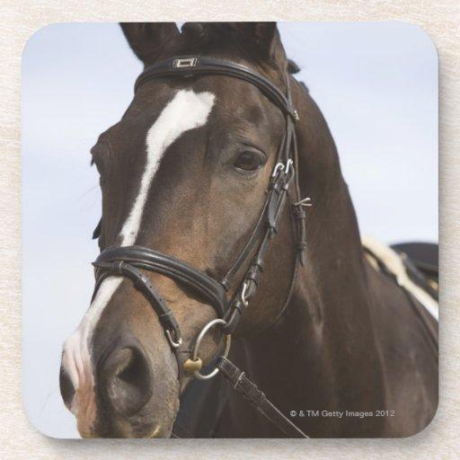 portrait of brown horse coaster