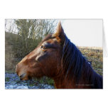 Portrait of brown horse on cold day staring into greeting cards