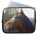 Portrait of brown horse on cold day staring into laptop sleeve