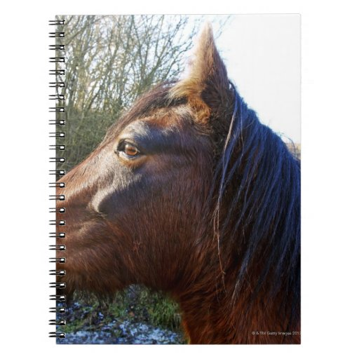 Portrait of brown horse on cold day staring into note books