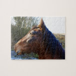 Portrait of brown horse on cold day staring into jigsaw puzzle